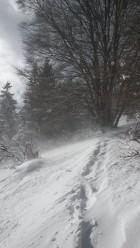 Torgon sortie raquette à neige